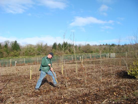 Stormont Estate - Tree Nursery