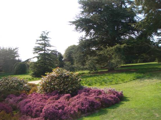 Flower beds in Stormont Estate